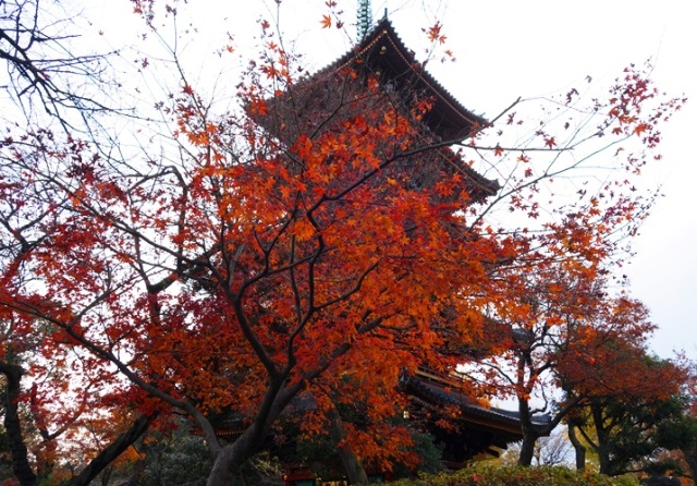 Red Tree, Red Leaves, Pagoda, Ueno Zoo, Tokyo, Japan