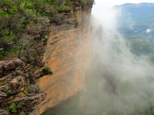 Blue Mountains, Katoomba, Australia, Fog, Rain Forest