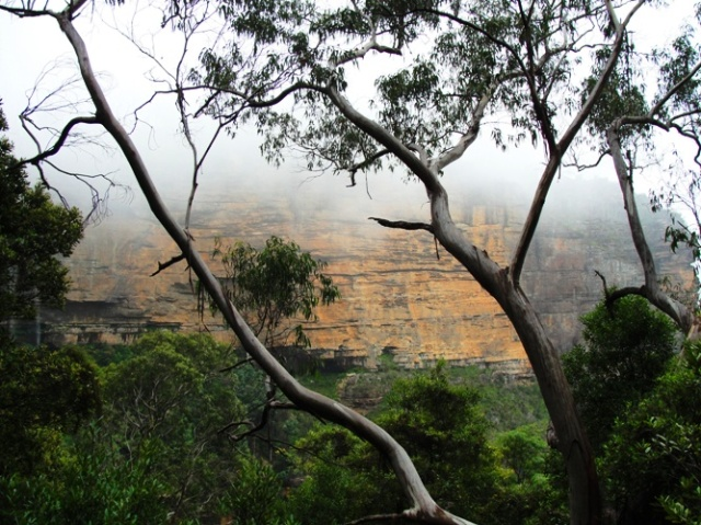 Katoomba, Australia, Blue Mountains, Nature