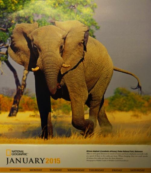 2015 National Geographic Elephant Calendar, Yearly Calendar, Elephants