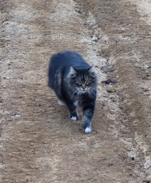 Farm Cat, Barn Cat, Orchard, Tarragon, Sunday Afternoon Walk