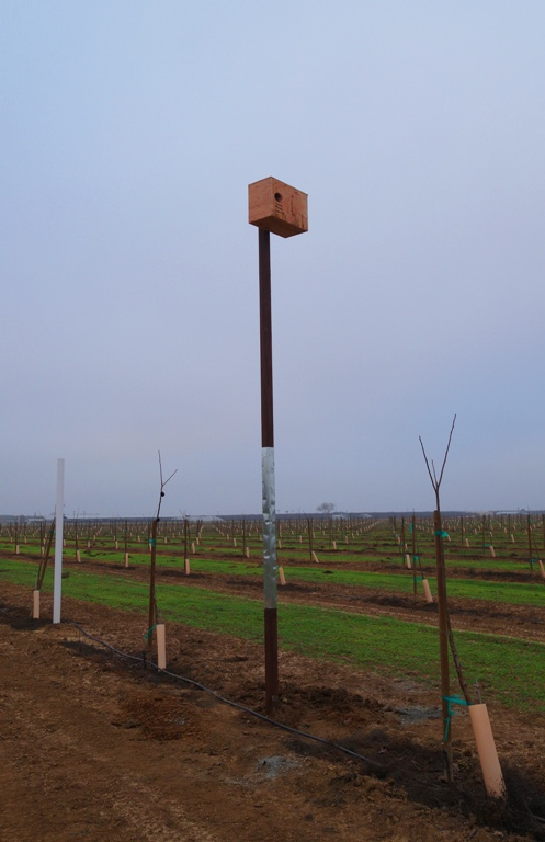 Nesting Box, Rodent Controll, Orchard, Barn Owl Nesting Box