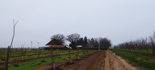 Orchard, Barn, Cloudy Day, Overcast Day, Sunday Afternoon Walk