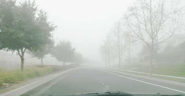 Fog, Trees in Fog, Driving in Fog
