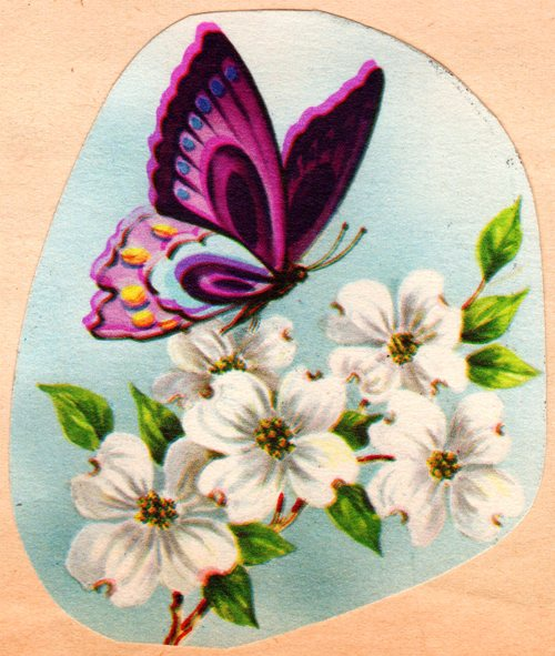 Butterfly, Blossoms, Spring blooms, Scrapbook