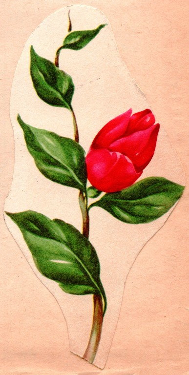 Valentine's Day Rose, Single Rose, Red Rose, Valentine's Day