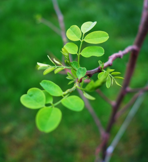 Tree, Spring Growth, Green Leaves, First Leaves, Spring
