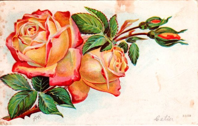 Rose Post Card, Vintage Post Card, Roses, 1909 Post Card