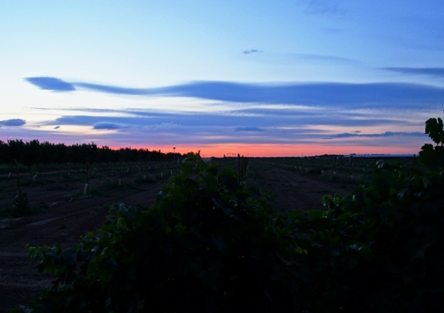 Dusk, Sunset, Colorful sky, orchard, grapevines, walnut trees