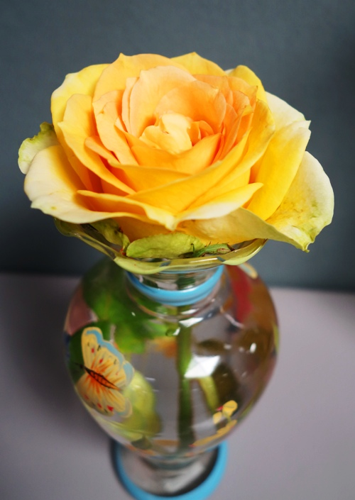 St. Patrick Rose, Vase, Colorful Vase, Rose Bloom