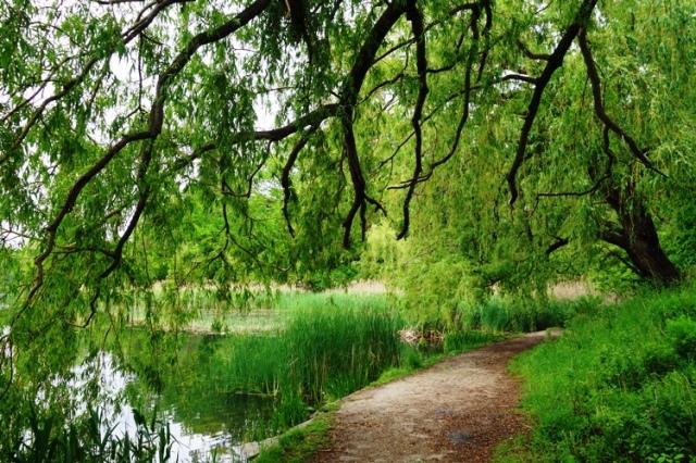 High Park, Toronto, Canada, Grenadier Pond, Spring, Trees