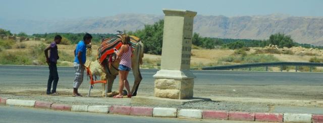Camel, Israel, Dead Sea, Camel Rides