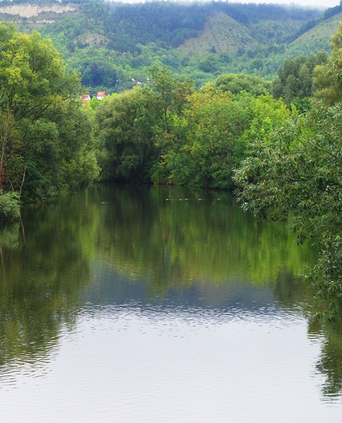Saale River Reflection, Jena, Germany, Trees