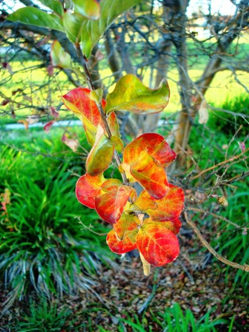 Zanussi Park, Tracy, California, Fall Color