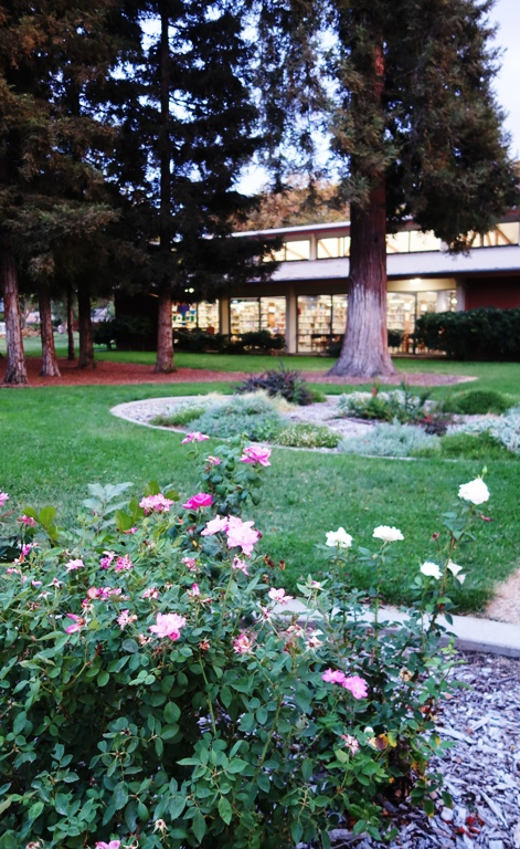 Tracy Library, Flower Gardens, Rose Gardens, Nature