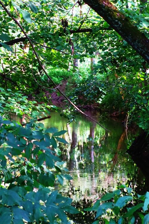 Roda River, Saale River, Jena Germany