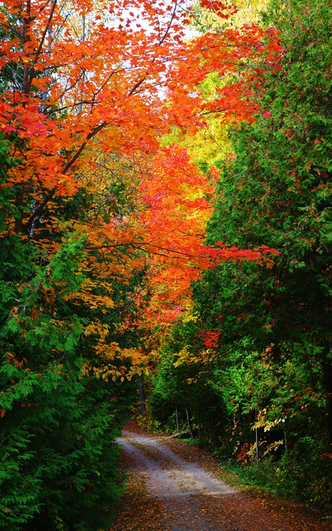 Fall Color, Colorful Lane, Fall, Autumn, Red Leaves