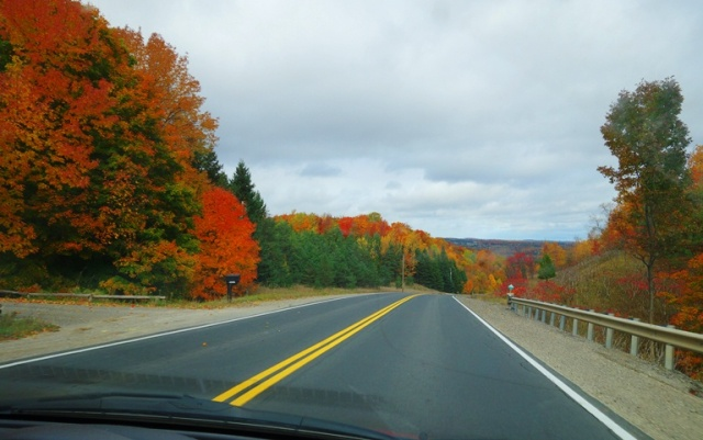 North of Toronto, Fall Color, Autumn, Colorful Trees