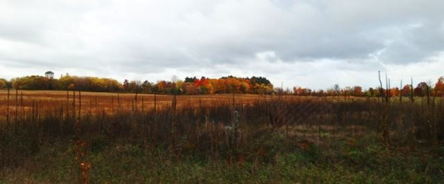 Canadian Landscape, Fall Color, Harvested Field