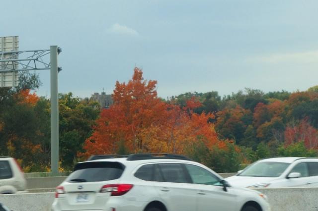 Colorful Commute, Toronto Traffic, Fall Color
