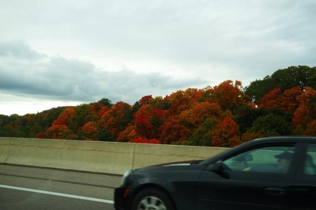 Fall Color, Commute, Colorful Commute, Toronto
