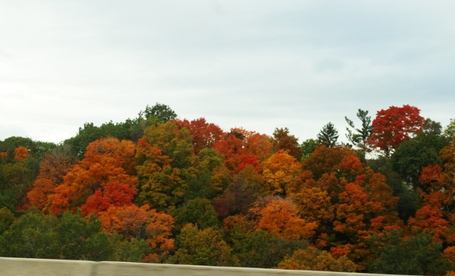 Don River Valley, Colorful Commute, Toronto, Canada, Fall Color