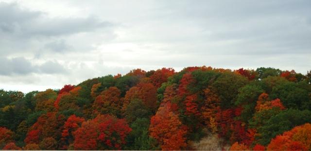 Don Valley, Don River, Toronto, Canada, Fall Color, Autumn