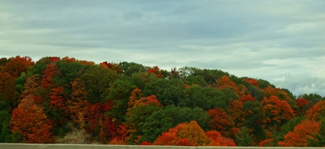 Don Valley, Don River, Fall Foliage, Autumn, Red Trees