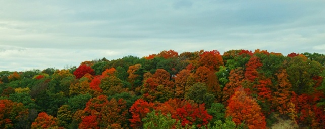 Toronto, Don Valley, Red Foliage, Fall color