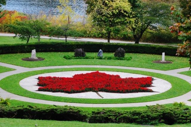 Maple Leaf, High park, Toronto, Canada, Flower Leaf