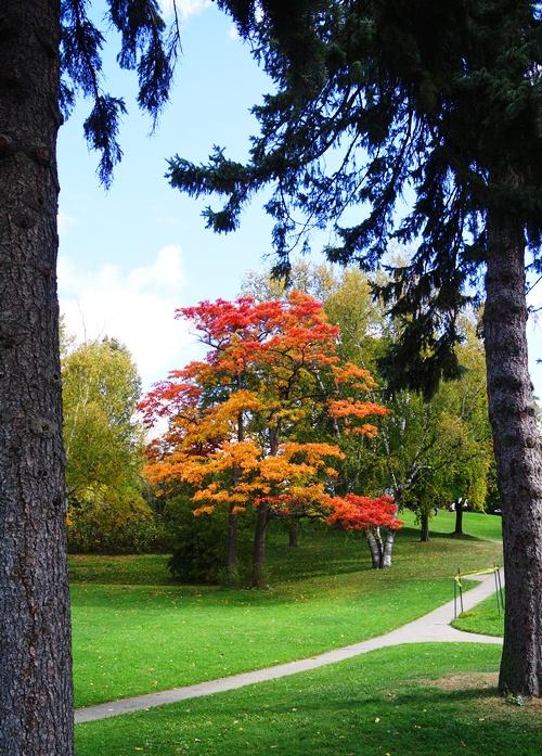 Fall Color, High Park, Toronto, Canada