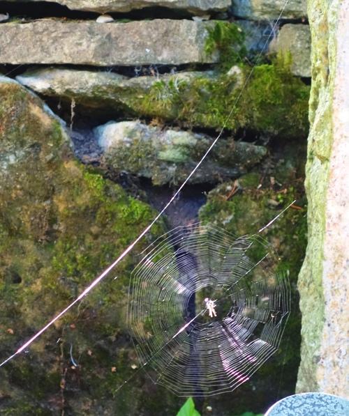 Cobweb, Jena, Germany, Cemetery, spider, spider web