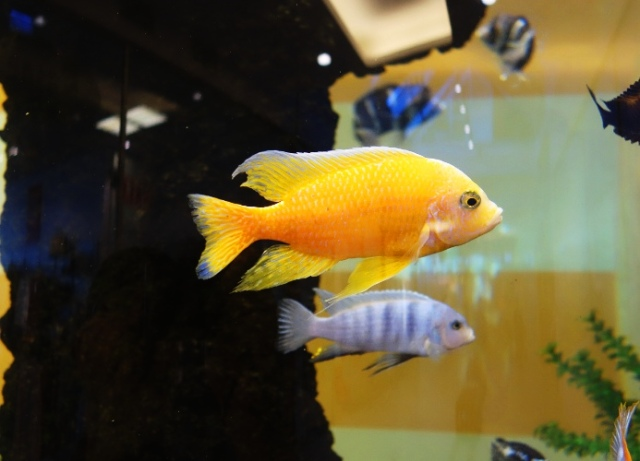Tropical Fish, Jena, Germany, Intershop Tower, Fish Tank