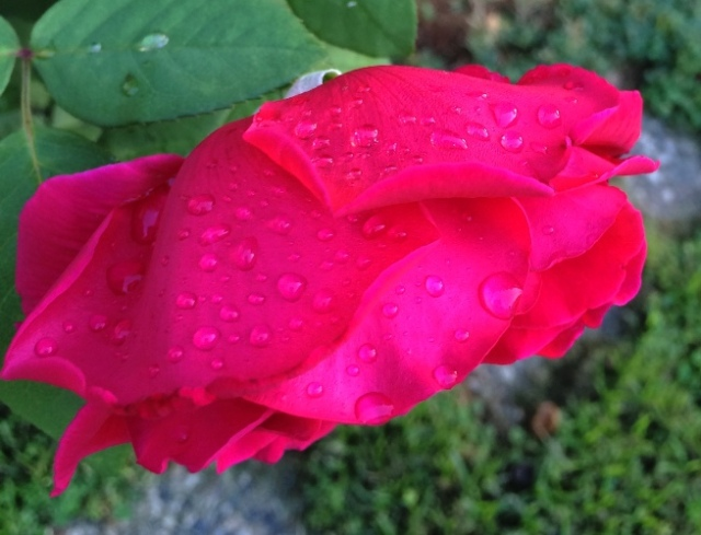 Raindrops, Rose Petals, Sound of Music, Raindrops on Roses