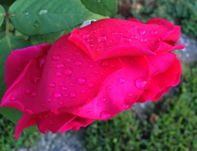 Raindrops, Rose Petals, Sound of Music, Raindrops on Roses