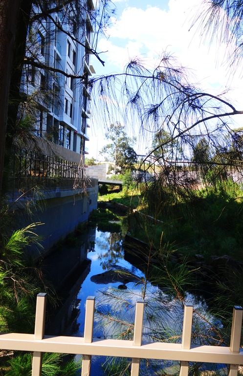 Shrimptons Creek, North Ryde, Australia, Nature