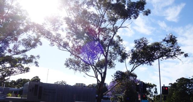 Walk to Work, north ryde, Australia, Trees