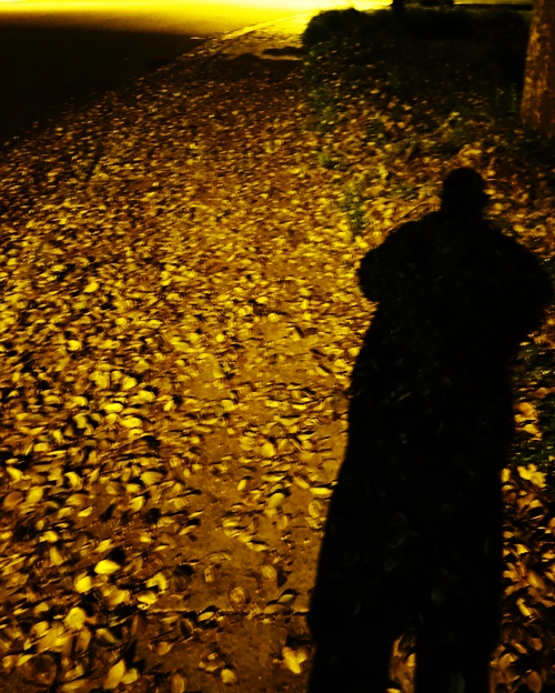 Evening Walk, Leaves, Silhouette, December Walk, Night Walk
