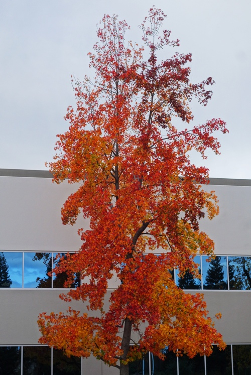 Yellow Red Leaves, Autumn, Tree Color, Fall Color