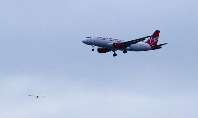 Plane Spotting, Virgin America, Sea Gull, SFO