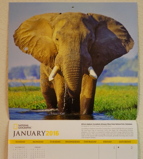 national geographic calendar, Elephants, Elephant calender, Flip Day