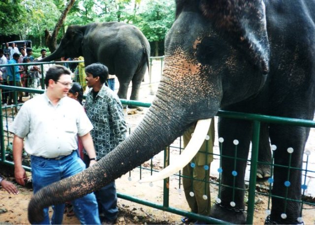 Bannerghatta National Park, elephant, India, Bangalore, Bengaluru, 1990's