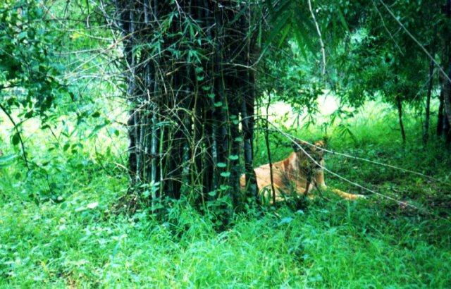 Bannerghatta National Park, Lion, tiger, Bangalore, India