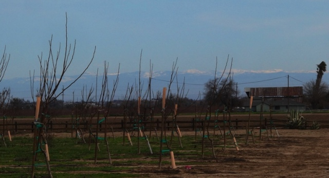 Sierras, Mountains, Snow Capped Peaks, Orchards, patterson, Old Barn