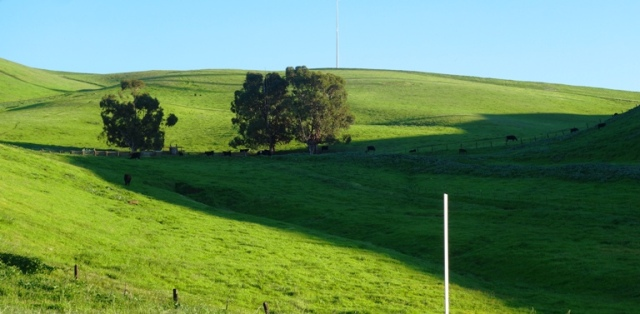 Country, Ranch, Altamont Hills, Green Hills, Cattle