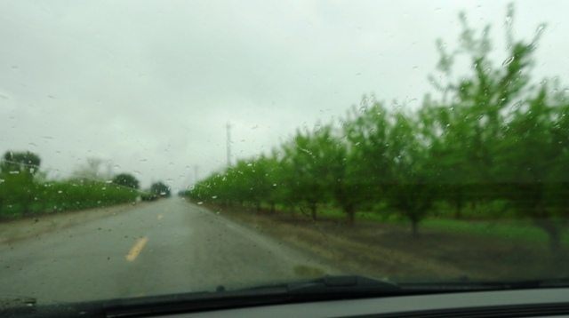 Rainy Day, Orchards, Trees, Rain, Windshield Focus