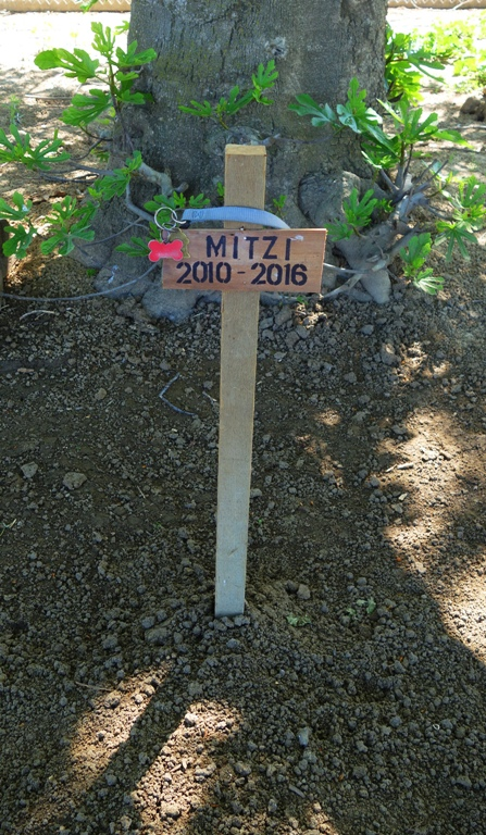Mitzi, Barnyard Dog, Memorial, Dog Grave, farm dog