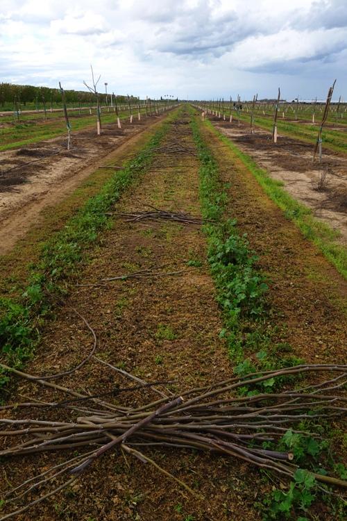 Pick up sticks, lay them straight, mulching, pruning