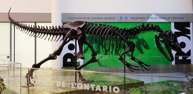 Toronto Airport, dinosaur skeleton, royal Ontario museum