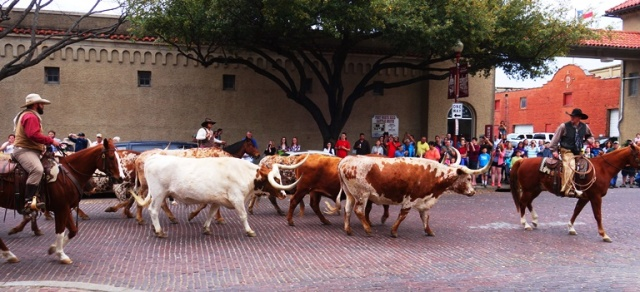 Texas Longhorns, Texas, Fort Worth, Cattle Drive